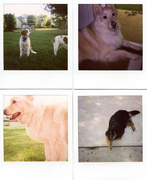 Paloroid SX-70 Photo 7